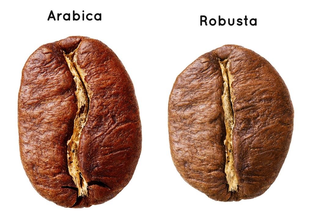 So sánh hạt cà phê Robusta và hạt cà phê Arabica