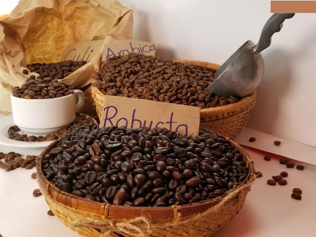 So sánh màu sắc bên ngoài của cà phê Robusta và cà phê Arabica