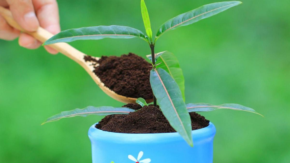 Công dụng Bã Cà Phê với thực vật cây trồng