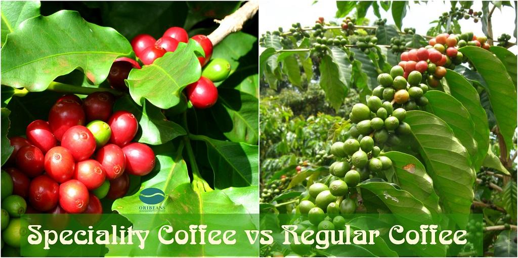Quy trình sản xuất Specialty Coffee