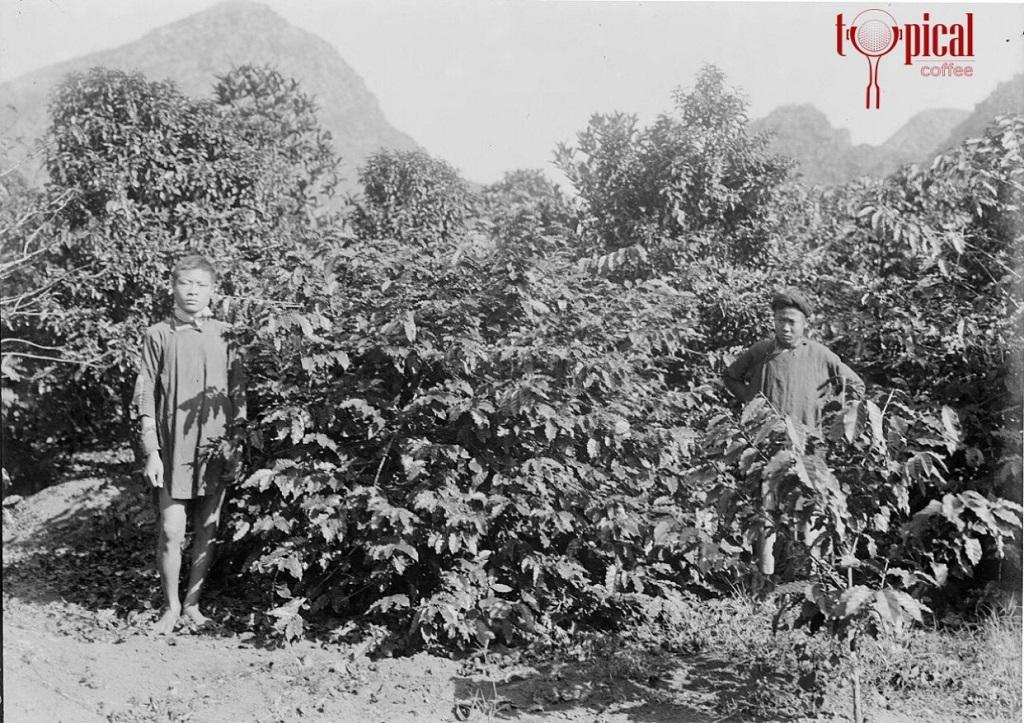 Lịch Sử Cà Phê Việt Nam ra đời ra sao