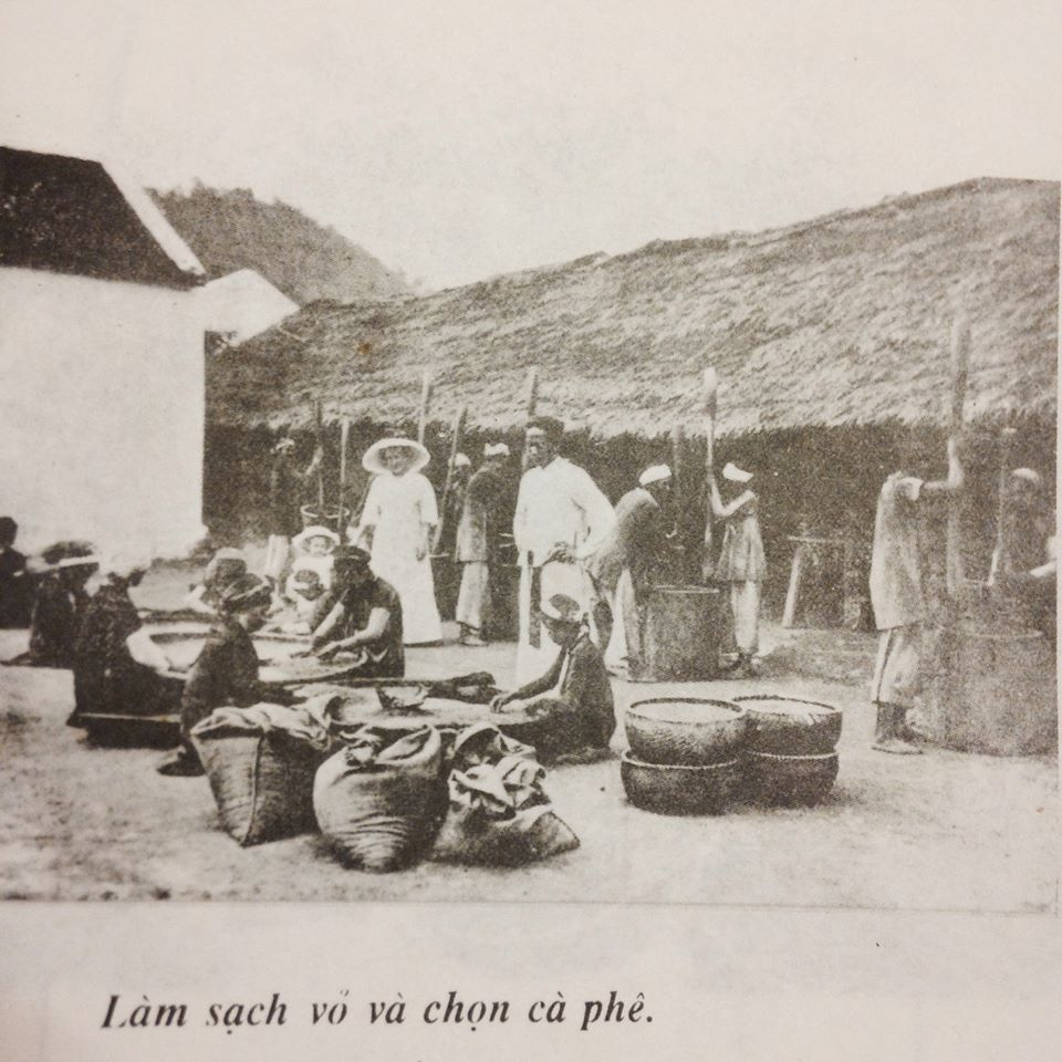 Lịch Sử Cà Phê Việt Nam ra sao